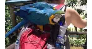 Birdworld Kuranda madár-vadaspark