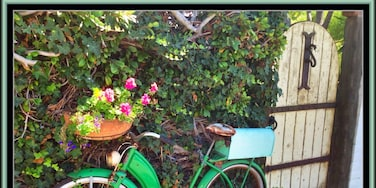 While traversing the hilly streets of this neighborhood I came across this vintage bike next to a worn garden gate and it caught my eye.