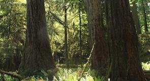 맥밀런 주립공원