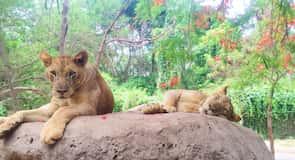 Bali Tengeri és Szafaripark