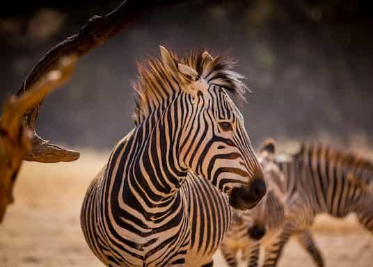 Madeteleli, Afrika Selatan