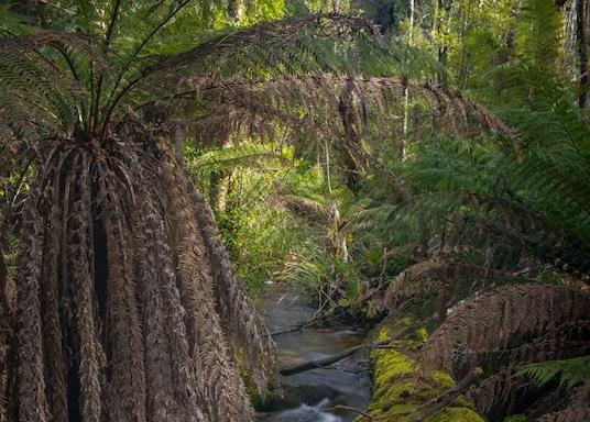 Κάμπαρβιλ, Βικτόρια, Αυστραλία