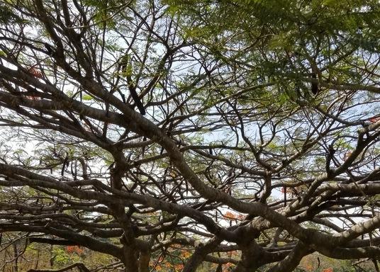 San Antonio de Belen, Costa Rica