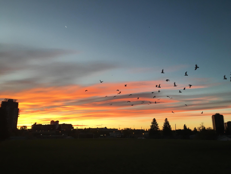 Haysboro, Calgary, Alberta, Canada