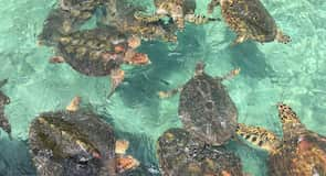 Rosario Islands Oceanarium