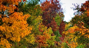 謝爾頓濕地州立自然保護區
