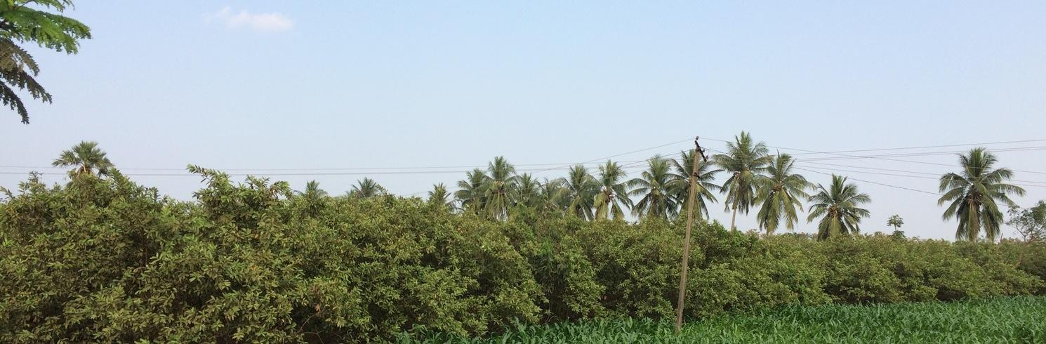 Bhimavaram, Indien