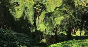El Vedado