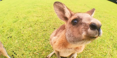 Got up close and personal with some friendly kangaroos at the Morisset Mental Hospital.