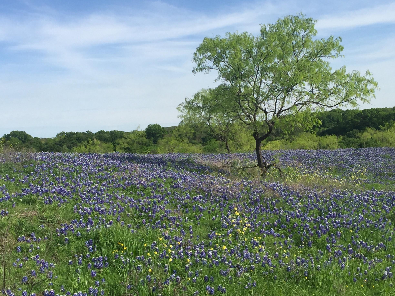 Ellis County, Texas, United States of America
