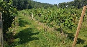 尼塔尼山葡萄園及酒莊