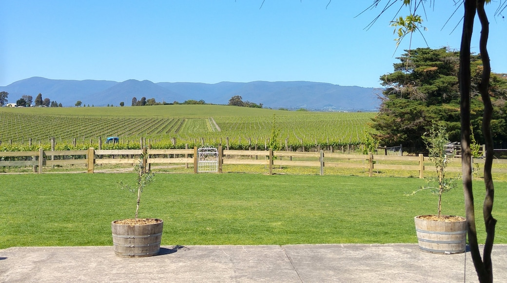 Photo by Yarra Valley Life
