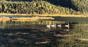 Tern-tó