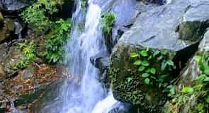 Phong Nha Botanic Garden
