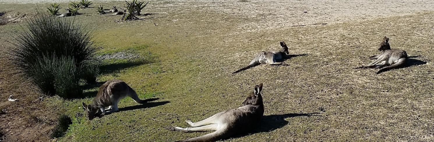 Pebbly Beach, Nova Gales do Sul, Austrália