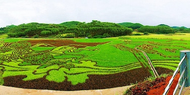 #Binyang Ancient Town of Nanning found a huge paddy painting
