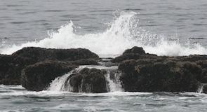 Pantai Botani