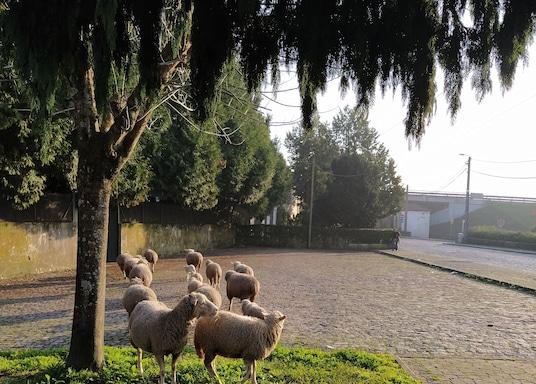 마이아, 포르투갈
