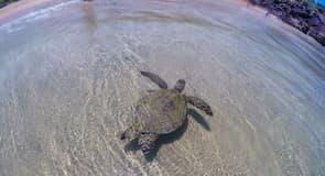 哈普納海灘國家公園