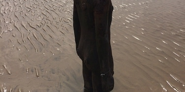Anthony Gormley - Another Place !  #art