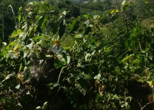Matagalpa, นิการากัว