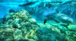 עולם המים (סימן רשום) אורלנדו