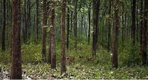 Nagarholen kansallispuisto
