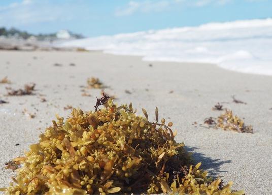 Wabasso Beach, Florida, Estados Unidos