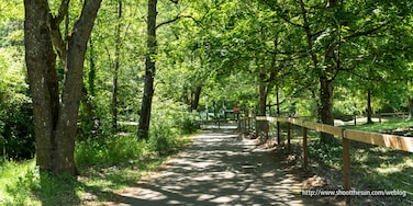 Come spring, the greenway trail is a cool, inviting place to wander along the water and hear the birds skittering through the trees.