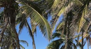 サンタ マリア デル マール ビーチ