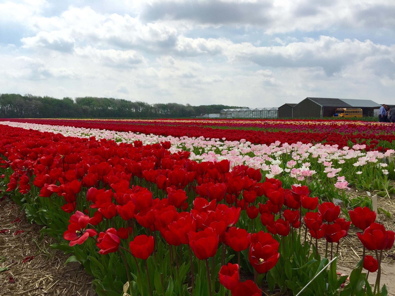 Ruigenhoek, Noordwijk aan Zee, Zuid-Holland, Nederland
