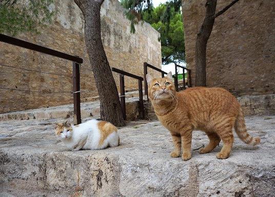 Staré mesto Rethymno, Grécko