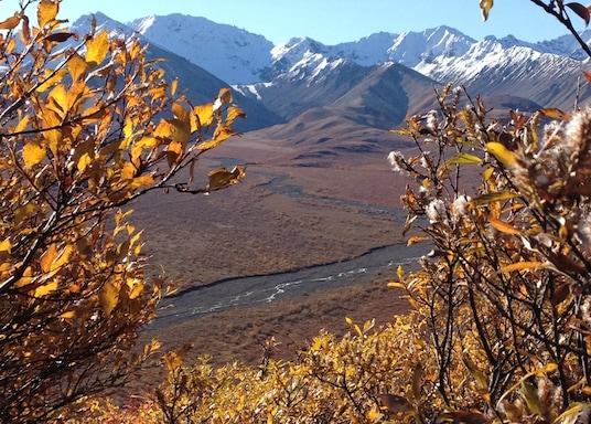 דנאלי (והסביבה), אלסקה, ארצות הברית