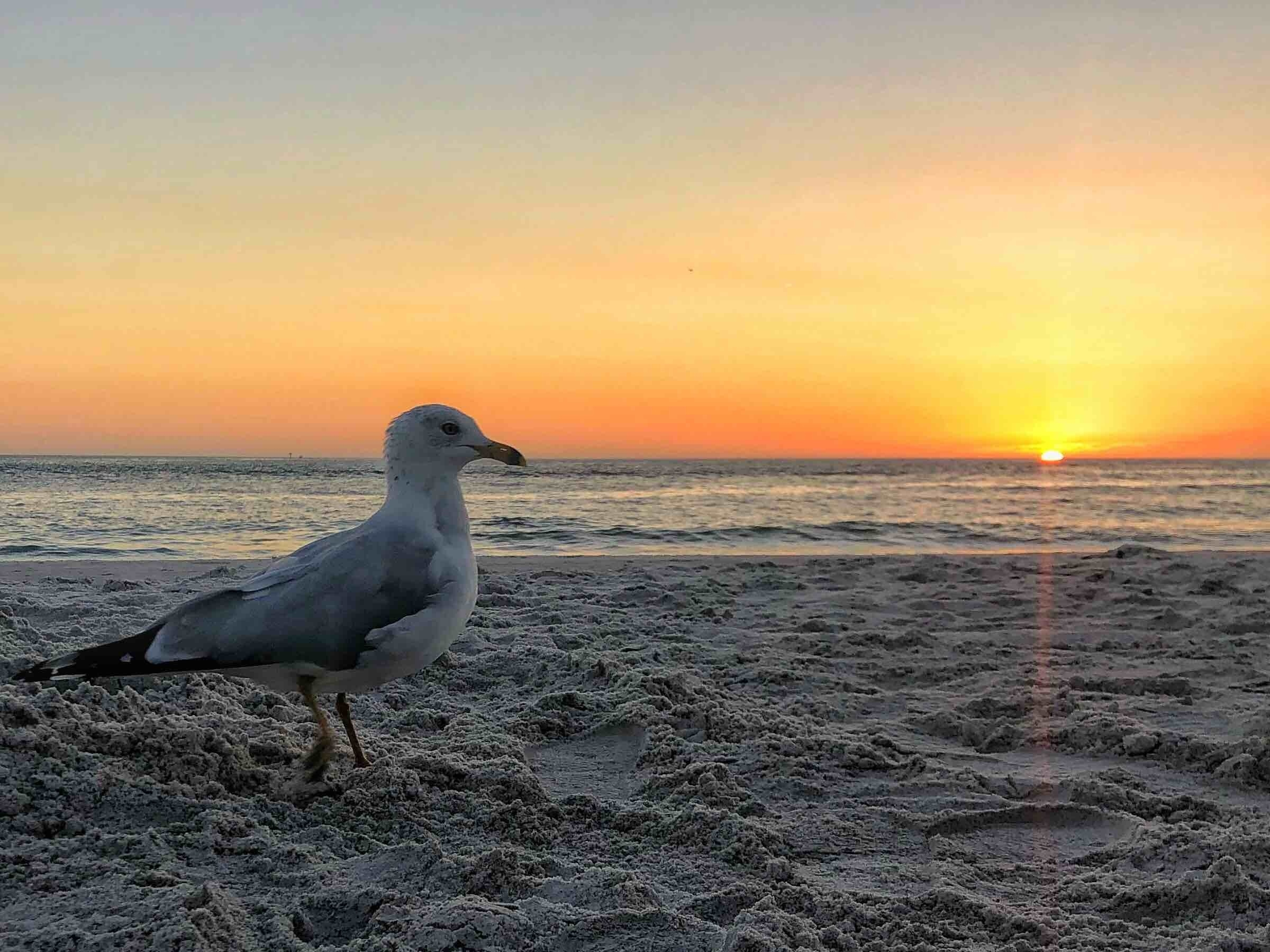 Surf Song, Madeira Beach, Florida, United States of America