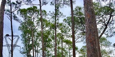 Love Spring in the pine savannah in Mississippi. #green