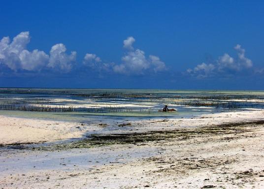 Pongwe, Tanzanie