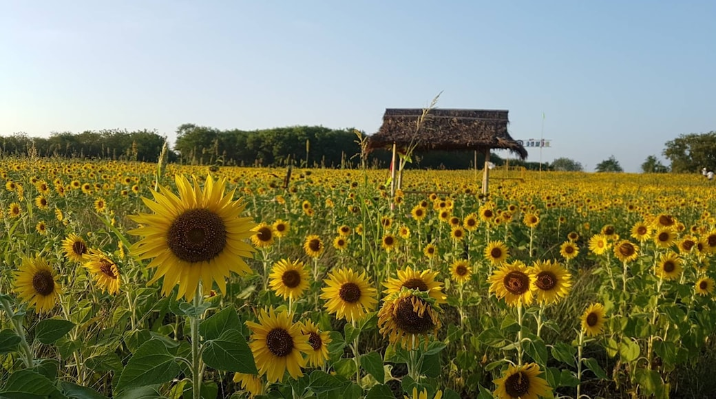 Photo by Noon Kwankaow H