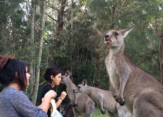 Morisset, Nueva Gales del Sur, Australia