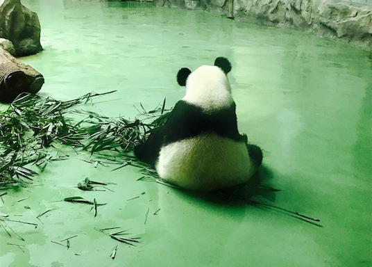 Chengdu, Kiina
