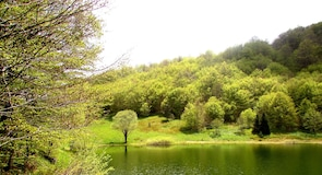 Зеленгора