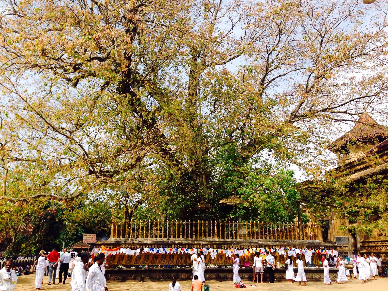 Kelani Raja Maha Viharay, Peliyagoda, Western Province, Sri Lanka