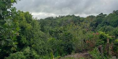 River Oaks, Ocho Rios, Saint Ann, Jamaïque