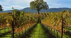 B.R. Cohn Winery