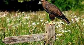 Centre ornithologique Barn Owl Centre