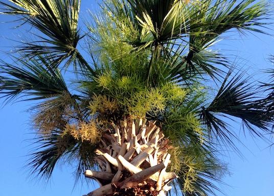 奥維耶多, 佛羅里達, 美國