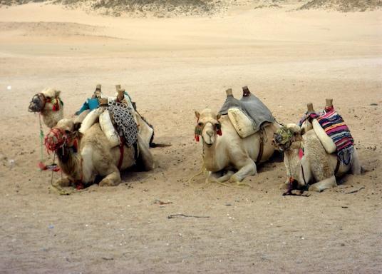 El Gouna, Egipto