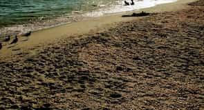 Bowman's Beachi rand