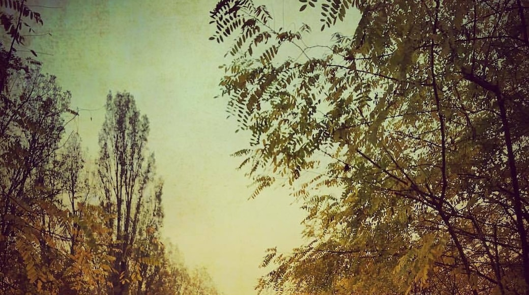 Foto von Enrica Bisi