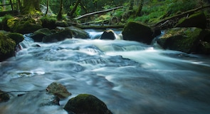 Golitha Falls (Wasserfall)