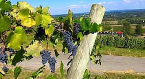 "Vyno darykla ""Bluemont Vineyard"""